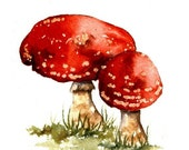 Watercolour sketch - Fly agaric toadstool