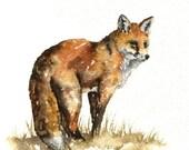 Watercolour sketch - Red Fox