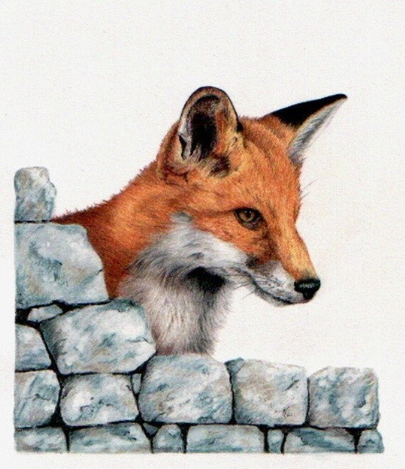 Fox Pencil Drawing Coloured Pencil Drawing of a
