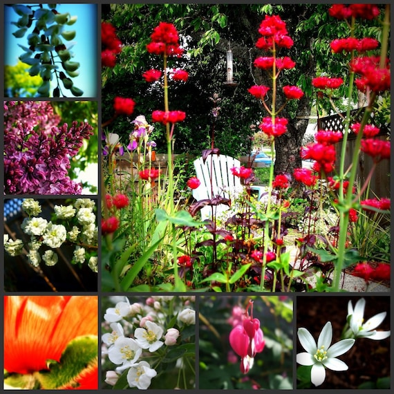 Floral Photography, Collage, Orange, Pink, White, Purple, Garden, Summer Time, Home Decor, 8 x 10 print,