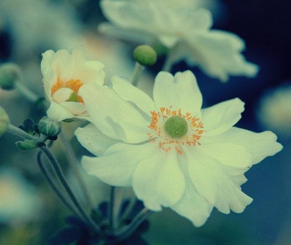 Floral Photography, Anemones, White, Garden, Summer time, Home Decor, 8 x 10 print,