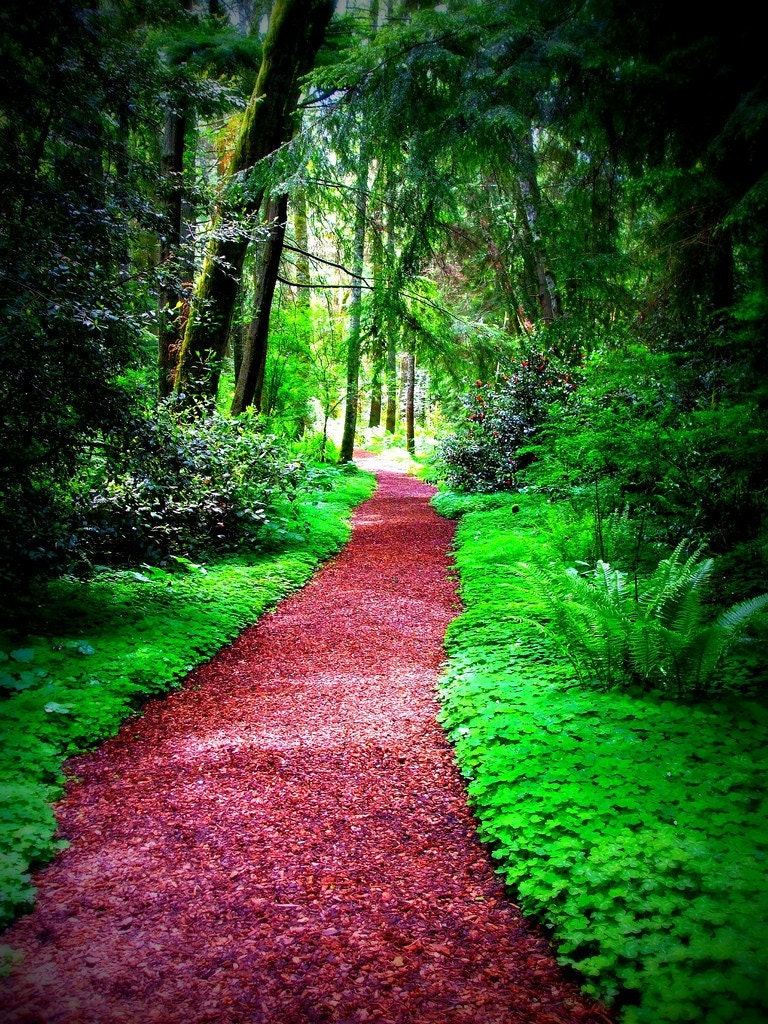 path forest pathways nature pathway trees evergreen etsy paths garden wooded landscape natures tree unknown forests gardens image1 ny walk