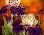 Purple and Beige Iris Flower Art Print Reproduction