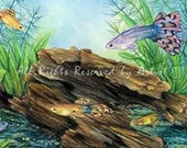 Fantail Guppies Fish Art Print Aquarium Reproduction Frsmed Canvas Giclee Colored Pencil Art