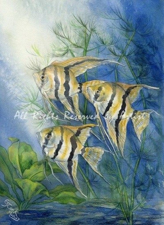 Striped Tropical Angelfish Art Print Giclee Reproduction