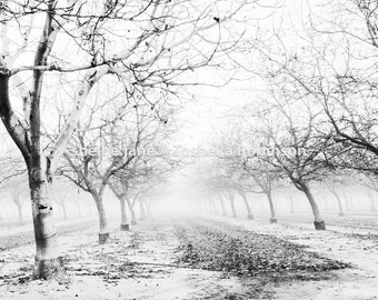 Into the Fog Two