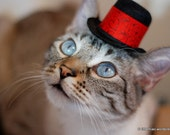 Valentine's Day Hat - Wedding Pet Hat - Cat Hat for Wedding - All You Need is Love