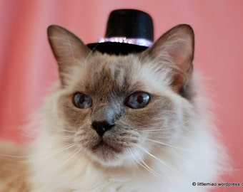 Cat Top Hat - Mother's Day Hat - Valentine's Cat Hat - Glittering and Bright - Glitz and Glam Hat for Small Pets - Cat Accessory