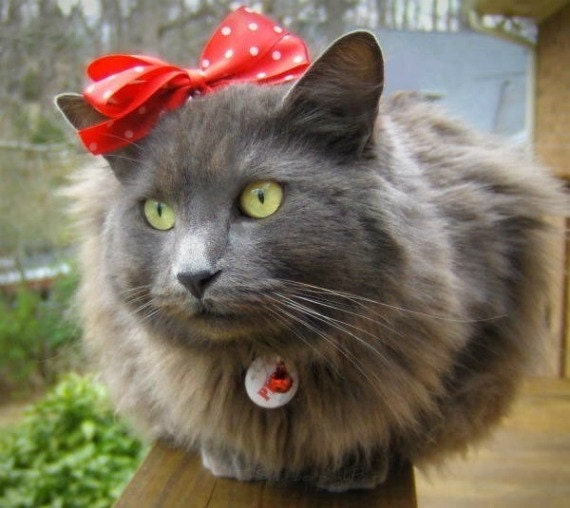 Cat Bow - Minnie Mouse Style