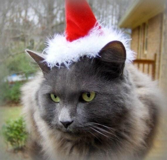 Santa Hat for Cat - Christmas Cat Hat - Santa Paws - Velvet and Dawn Santa Cat Hat