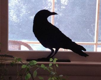 Crow Looking