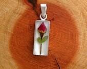Real Rose Pendant - flower with white  - flowers, miniature, roses, love, eternal, forever, believe, bud, lover, friend, true, slide, red