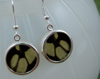 Real Butterfly Wing Earrings -Small Round Glass Wing