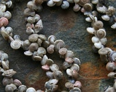 Long and Dainty Vintage Shell Necklace - Great for Summer Beach Island Cruise YART