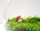 Little Leroy Owl Terrarium