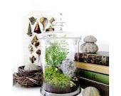 Large Apothecary Jar Terrarium: Woodland Treasures
