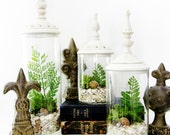 Last One - Decorative Terrarium Set: Woodland White Shabby Chic Jars with Live Plants
