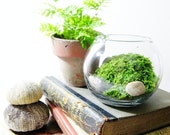 Live Plant Office Terrarium: Mini Indoor Desk Garden - Glass Bowl & Live Moss - Easy Starter Terrarium