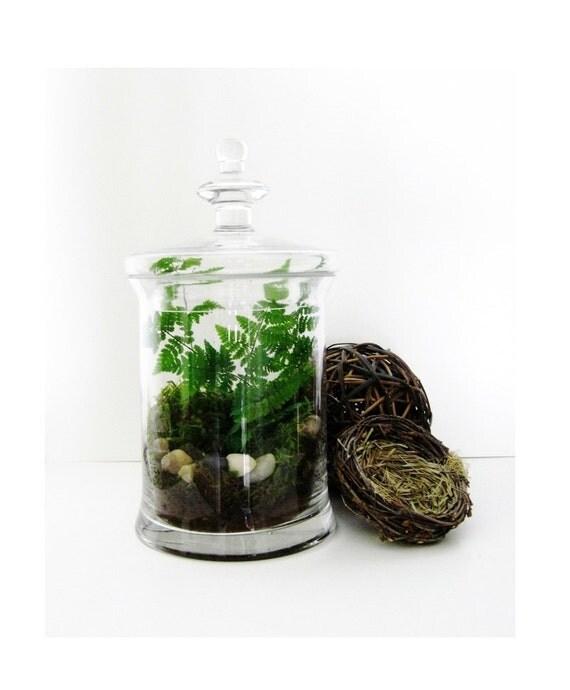 decorative fern terrarium woodland garden in by doodlebirdie. Black Bedroom Furniture Sets. Home Design Ideas