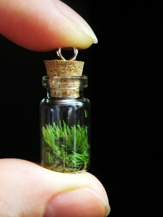 Сад в бутылке