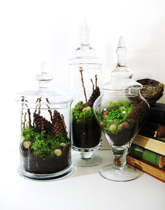 SALE Apothecary Jar Terrarium Set: Live Moss, Twigs, and Pinecones