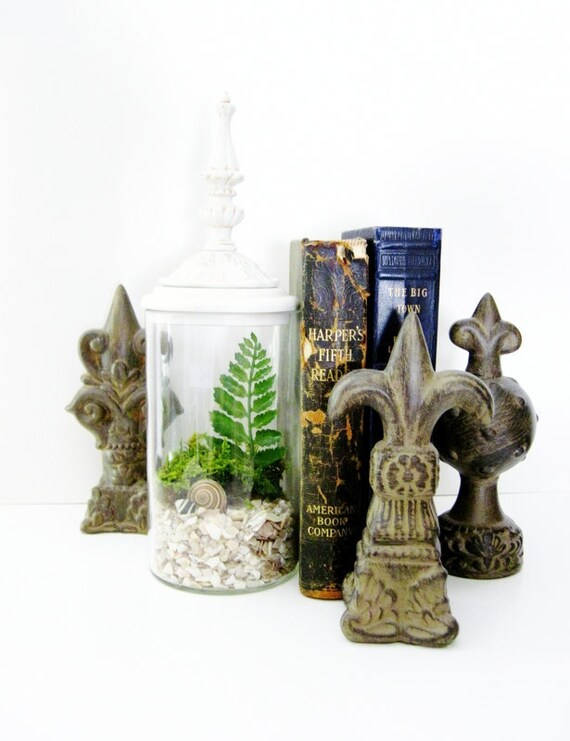Decorative Plant Terrarium in Vintage Style Lidded Jar