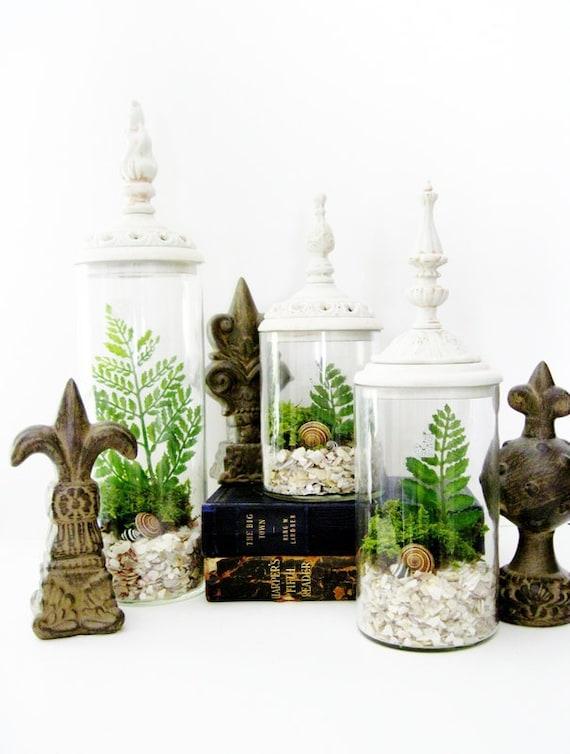 Last One - Decorative Terrarium Set: Woodland White Shabby Chic Jars with Live Plants