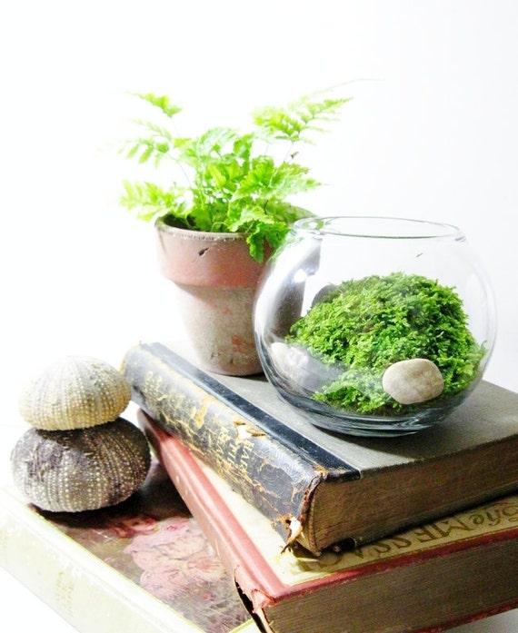 Live Plant Office Terrarium: Mini Indoor Desk Garden - Glass Bowl & Live Moss - Easy Starter Terrarium
