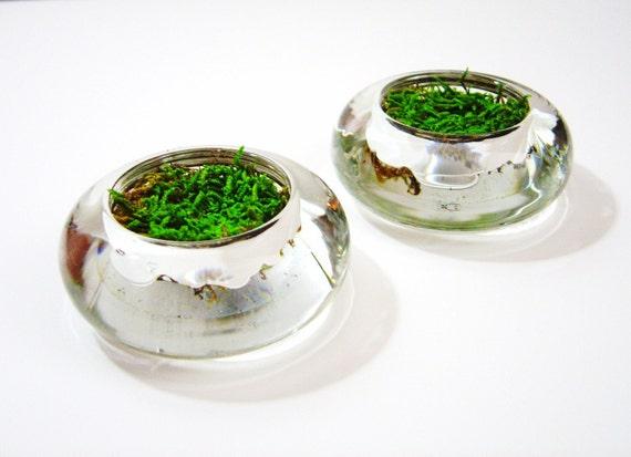 Set of 3 - Miniature Moss Gardens