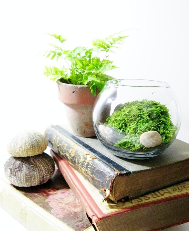 Live plant office terrarium mini indoor desk garden glass - Cubicle planters ...