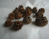 15 Pine Cones Mini for your crafting and decorating Pinecones