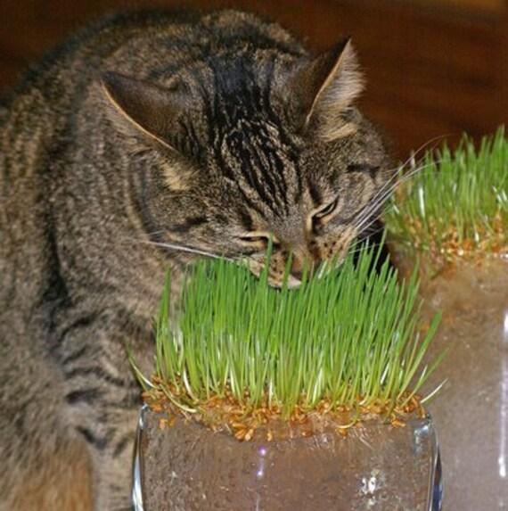 Seed Cat – Jerusalem House