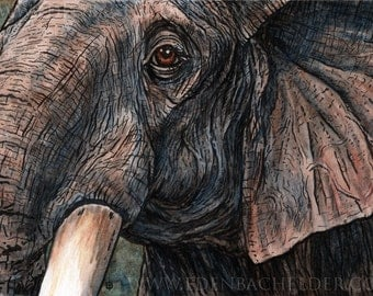 Elephant watercolour, signed and matted print from an original ink and watercolor painting by Eden Bachelder