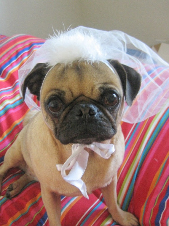 Wedding party - Dog or Cat VEIL - PET BRIDAL veil  for any size -Ships in 24hrs