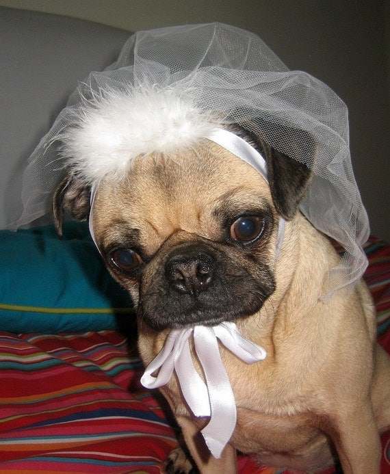 Wedding Party Dog Or Cat VEIL PET BRIDAL Veil By Bridalparty