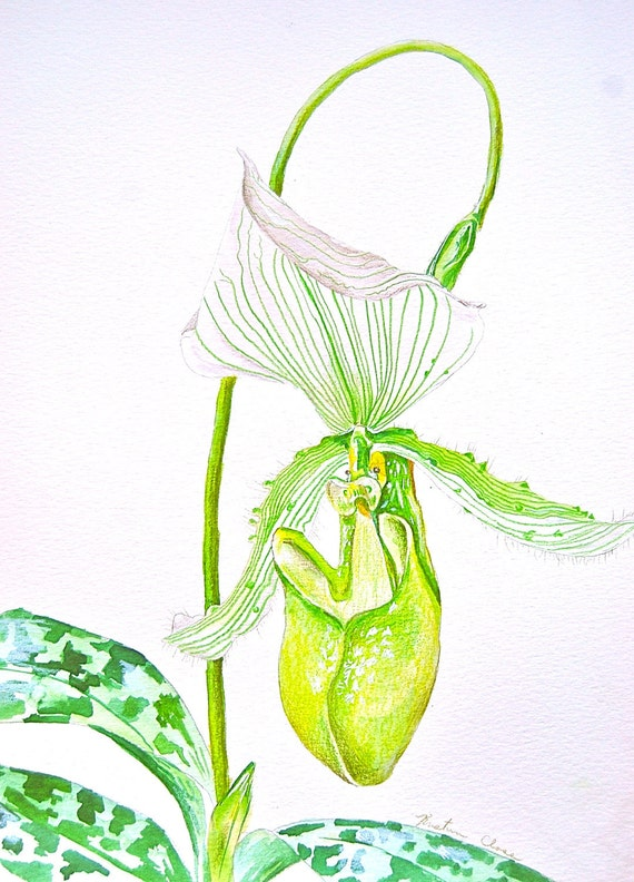 """Green Lady Slipper Orchid- Original Watercolor Painting 9""""x12"""", Botanical illustration"""