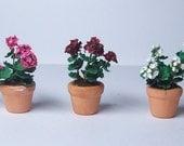 geranium half scale, FREE SHIPPING