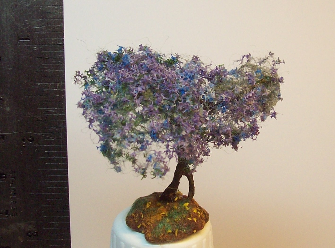 jacaranda bonsai 2. Black Bedroom Furniture Sets. Home Design Ideas