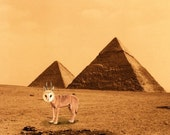 Egypt photo,Quirky WolfOwl At The Pyramids in Giza, 8x10 art print