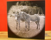 Zebra's Secret ,Animal Art Print, 5x5 Wood Block,