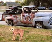 Art Print,Wild  Wolfowl in front of Gang truck in LA