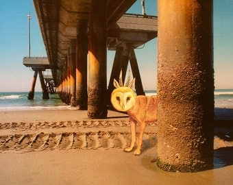 Wild  Wolfowl Under the Venice Pier , Signed, 8x8 digital archival print