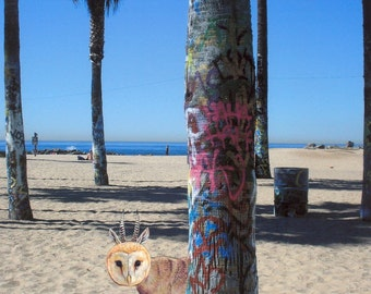 Venice beach photo,Signed art print, 8x10,Quirky WolfOwl with Graffiti Painted Tree