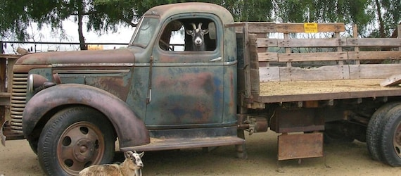 "Truck Driving Goat, Old Chevy, Fine Art Print, As seen in ""Southern Living"" magazine ,July,2011"