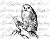 Digital Download Owl Vintage Illustration Transfer for Pillows Totes Tea Towels Wood Tile Glass