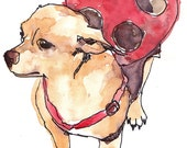 Chihuahua in a Ladybug Costume Print