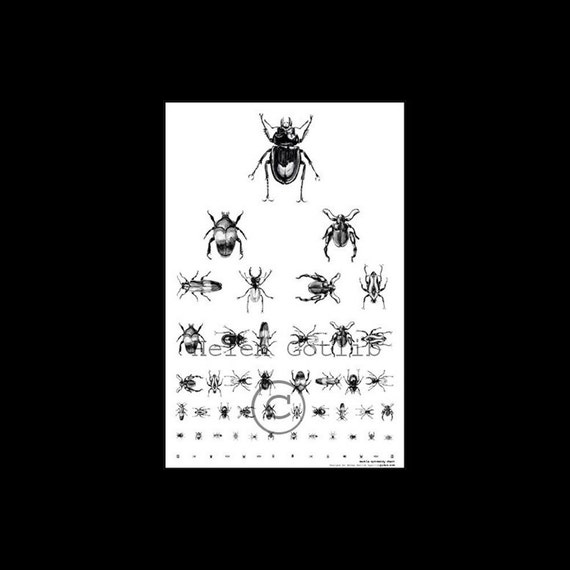 Beetle optometry poster eye chart insect collection signed copy