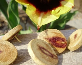 set of 20 Cedar tree wood button push pins