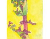 Angelica Fine Art Print from The Exuberant Garden hardcover book