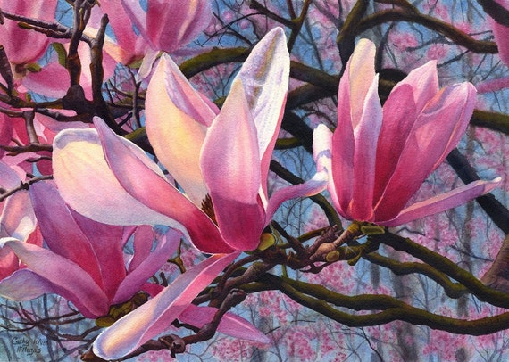 Pink magnolia art watercolor painting print by Cathy Hillegas, 12x16, watercolor magnolia, watercolor flowers, pink flowers, red blue black